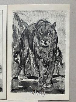 Lot 5 Gravure Art Deco Panthere Lion Tiger Elephant Rhinoceros Signed Paul Jouve