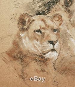 Gaston BLONDEAU dessin lion lionne fauve tableau art animalier art déco animaux